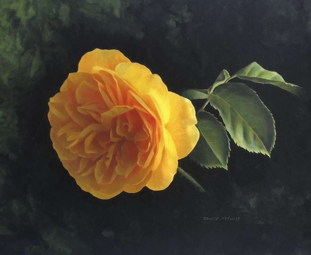 Golden Rose  by Denise Heywood
