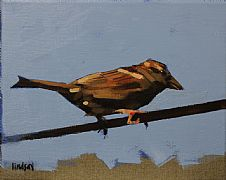Sparrow Finch by Steven Lindsay